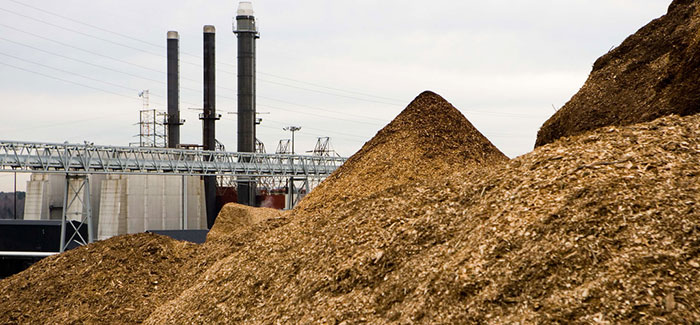 the waste sawdust in power station